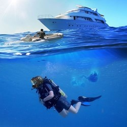 Ocean Reef L.A. Project Kit   Medium/Large