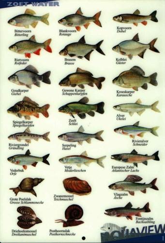Visherkenningskaart Zoet Water